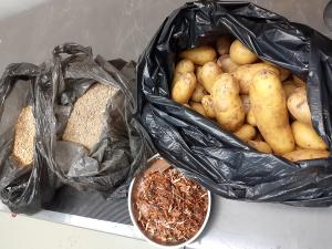 Kuvassa lämpöprässin raaka-aineita: perunoita ja haketta.