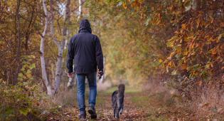 Kuvassa on syksyinen puistotie. Puiden lehdet ovat keltaisia, ruskeita, osa vielä vihreitä. Nurmikkoisella tiellä näkyy katsojasta poispäin kävelevä mies, jolla on huppu päänsä päällä. Hänen vierellään kävelee musta koira. Kuvassa on hieman alakuloinen tunnelma.