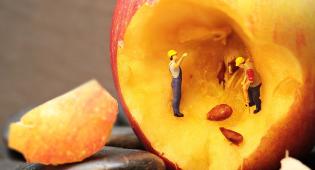 Kuvituskuva: hedelmän sisällä kaksi lelu-ukkoa kaivavat tunnelia.